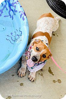 Beagle Mix Dog for adoption in Muldrow, Oklahoma - Maddie Rosalie
