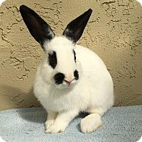Adopt A Pet :: Axel - Bonita, CA