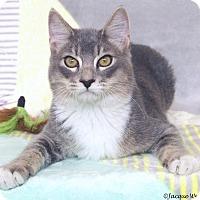 Adopt A Pet :: Churchill - St Louis, MO
