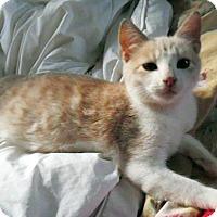 Adopt A Pet :: Rosita - Durham, NC