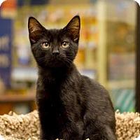 Adopt A Pet :: Bane 160893 - Atlanta, GA