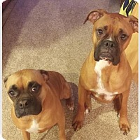 Adopt A Pet :: Bella and Buster - Wilmington, NC