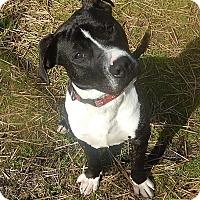 Adopt A Pet :: Cody - Newport, NC