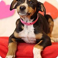 Adopt A Pet :: Carla - Waldorf, MD