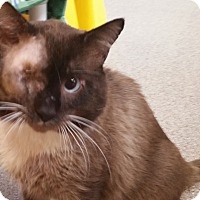 Adopt A Pet :: Ferdinand - Sarasota, FL