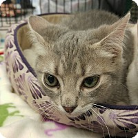 Adopt A Pet :: Angelo - Waldorf, MD