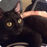 Adopt A Pet :: Rayen - Yorba Linda, CA