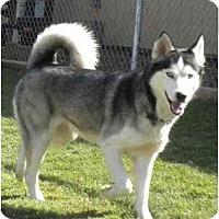 Adopt A Pet :: Denver (and Aspen) - Newbury Park, CA