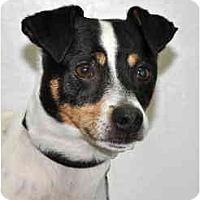 Adopt A Pet :: Cubby - Port Washington, NY