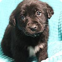 Adopt A Pet :: Kristoff - Wytheville, VA
