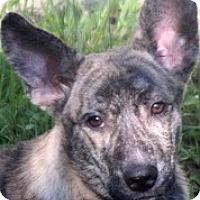 Adopt A Pet :: BRADY - Wakefield, RI