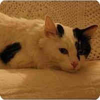 Adopt A Pet :: Candi - Arlington, VA