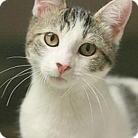 Adopt A Pet :: Petal - Canoga Park, CA