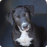 Adopt A Pet :: *Jackie Burkhart - PENDING - Westport, CT