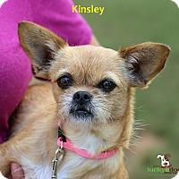 Adopt A Pet :: Kinsley - Alpharetta, GA