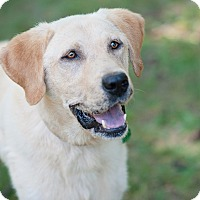 Adopt A Pet :: Thomas - Lewisville, IN