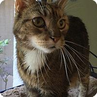 Adopt A Pet :: Essie - New Port Richey, FL
