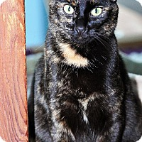 Adopt A Pet :: Sambuca - East Norriton, PA