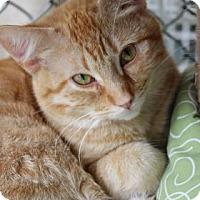 Adopt A Pet :: Pooka - Yucaipa, CA
