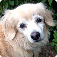 Adopt A Pet :: Lady - Fennville, MI