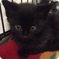 Adopt A Pet :: Elvira - River Edge, NJ
