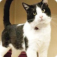 Adopt A Pet :: Do Jo - Lincolnton, NC