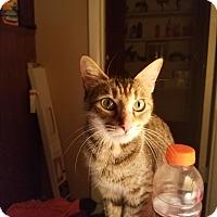 Adopt A Pet :: Lessie - Homewood, AL