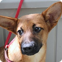 Adopt A Pet :: Liz  A Wonderful Girl!! - Yardley, PA
