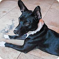 Adopt A Pet :: Tuxedo - Savannah, GA