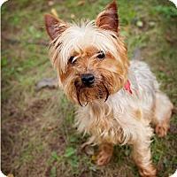 Adopt A Pet :: Baxter - Valparaiso, IN