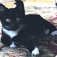 Adopt A Pet :: Chicklets - Wenatchee, WA