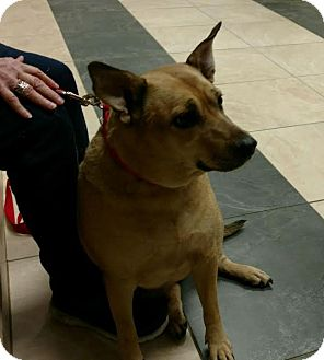 Shepherd (Unknown Type) Mix Dog for adoption in Huntley, Illinois - Lady Bug