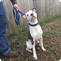 Adopt A Pet :: Astro - Virginia Beach, VA
