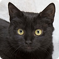 Adopt A Pet :: Aria - Bristol, CT