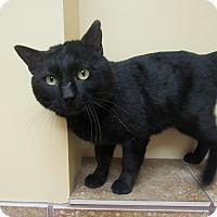 Adopt A Pet :: Scappy *Petsmart GB* - Appleton, WI
