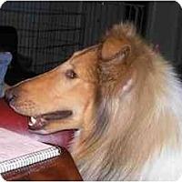 Adopt A Pet :: Monroe - Gardena, CA