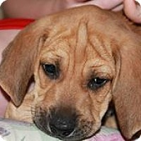 Adopt A Pet :: Toby - Franklin, VA