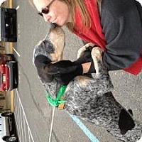 Adopt A Pet :: Jake 5 mos. - Marlton, NJ