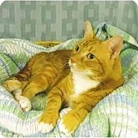Adopt A Pet :: Tigger - Mission, BC
