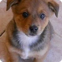 Adopt A Pet :: Joshua - dewey, AZ