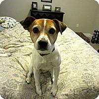 Adopt A Pet :: Maggie - Marietta, GA