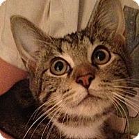 Adopt A Pet :: Jason - Simpsonville, SC