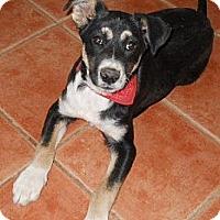 Adopt A Pet :: Charlie - dewey, AZ