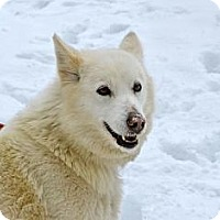 Adopt A Pet :: Snuggles - Jefferson, NH