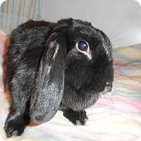 Adopt A Pet :: Guiness - Hillside, NJ