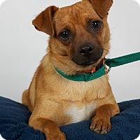 Adopt A Pet :: Corey - Nuevo, CA
