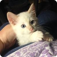 Adopt A Pet :: Blaze - San Ramon, CA