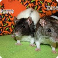 Adopt A Pet :: Pluto - Walker, LA
