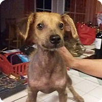 Adopt A Pet :: Carlton - Tucson, AZ
