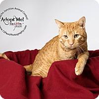 Adopt A Pet :: Archie - Apache Junction, AZ